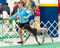 Sporting Breeds
