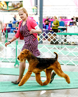 Airedales, Little Fort KC, Friday