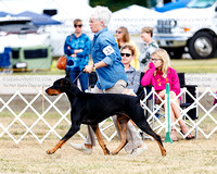 Dog Classes, 6-9, 9-12, 12-18, Bred By, Am Bred