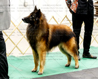 Sat Best of Breed