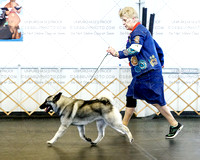 Sunday Dog Classes