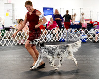 Sun Sweeps 6-9 & 9-12 Dog Classes